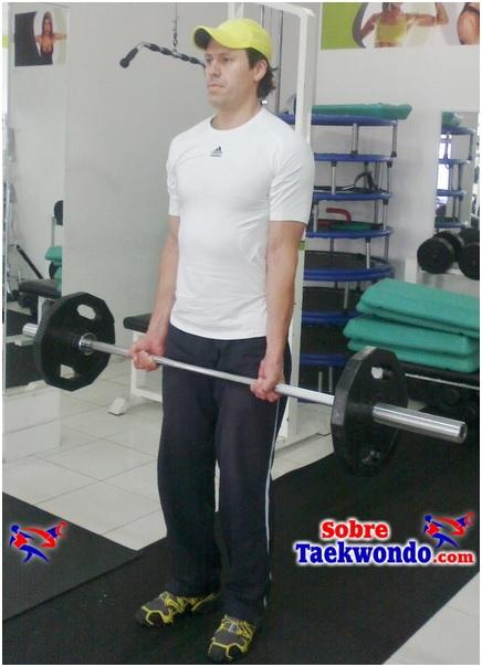 Biceps en barra1