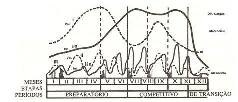 periodizacin de matveiev taekwondo